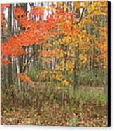 Autumn Golds Canvas Print by Margaret McDermott