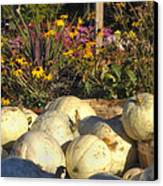 Autumn Gourds Canvas Print