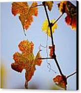 Autumn Grapevine Canvas Print by Dry Leaf