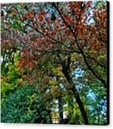 Autumn In Raleigh 009 Canvas Print