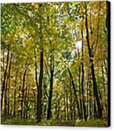 Autumn In Uw Arboretum In Madison Wisconsin Canvas Print by Natural Focal Point Photography
