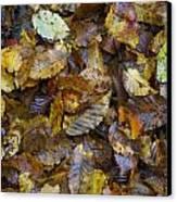 Autumn Leaves Canvas Print by David  Hawkins