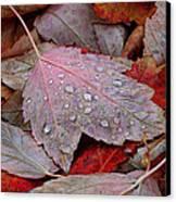 Autumn Melange Canvas Print by Rona Black
