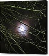 Autumn Moon Peeks Through The Branches Canvas Print