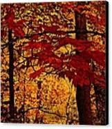 Autumn Mosiac  Canvas Print by Dianne  Lacourciere