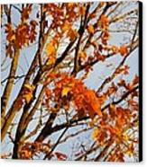 Autumn Orange Canvas Print by Guy Ricketts