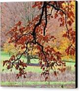 Autumn Rainbow Canvas Print by Todd Sherlock
