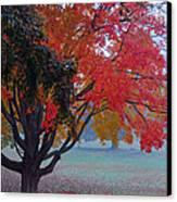 Autumn Splendor Canvas Print by Lisa Phillips