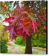 Autumn Splendor Canvas Print by Mamie Thornbrue