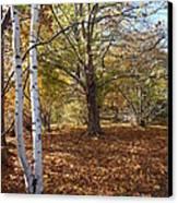 Autumn Stroll  Canvas Print by Kimberly Maiden