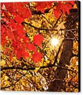 Autumn Sunrise Painterly Canvas Print