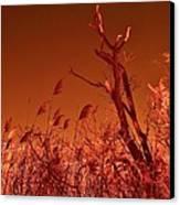 Autumn Surprise  Canvas Print