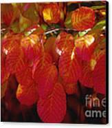 Autumn Canvas Print by Sylvia  Niklasson