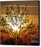 Autumn Tree In The Sunset Canvas Print by Michal Boubin