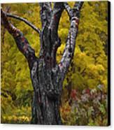 Autumn Trees3 Canvas Print