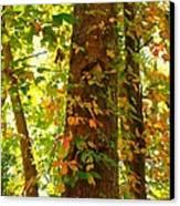 Autumn Vines Canvas Print by Candice Trimble