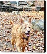 Autumn Walk Canvas Print by Bob Jackson