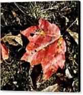 Autumns End Canvas Print by JAMART Photography
