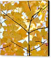 Autumn's Golden Leaves Canvas Print by Jennie Marie Schell