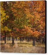 Autumn's Miracle Canvas Print