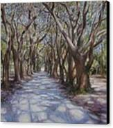 Avenue Of The Oaks Canvas Print by Henry David Potwin