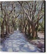 Avenue Of The Oaks Canvas Print