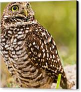 Awe Inspiring Owl Canvas Print by Andres Leon