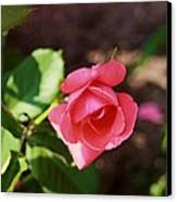 Awesome Rose Canvas Print by Victoria Sheldon