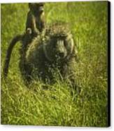 Baboon Canvas Print by Jennifer Burley