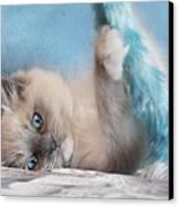 Baby Blues Canvas Print