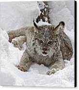 Baby Lynx In A Winter Snow Storm Canvas Print by Inspired Nature Photography Fine Art Photography