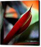 Baby Rubber Tree Canvas Print by Aya Murrells
