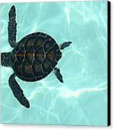 Baby Sea Turtle Canvas Print by Ellen Henneke