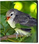 Baby Sparrow In The Maple Tree Canvas Print by Karon Melillo DeVega