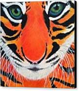 Baby Tiger Canvas Print by Lisa Bentley