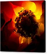 Backlit Flower Canvas Print by Fabrizio Troiani