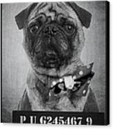 Bad Dog Canvas Print by Edward Fielding