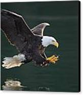 Bald Eagle Catching Fish Canvas Print by John Hyde