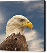 Bald Eagle With Piercing Eyes 1 Canvas Print