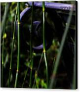 Bamboo And A Bench Canvas Print by Tara Miller