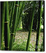 Bamboo Forest Canvas Print by Andres LaBrada