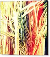 Banyan Tree Canvas Print by Chris Andruskiewicz
