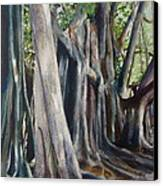 Banyan Trees Canvas Print by Karol Wyckoff