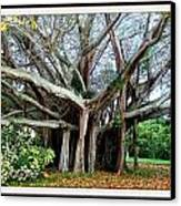 Banyon Tree Canvas Print by Bruce Kessler