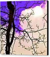 Bare Winter Branches Canvas Print by Michael Sokalski