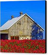 Barn In Red Clover Canvas Print by Denise Darby