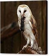 Barn Owl With Catch Of The Day Canvas Print