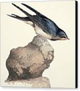 Barn Swallow, 19th Century Canvas Print by Science Photo Library