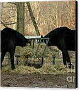 Barnyard Beauties Canvas Print