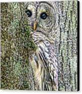 Barred Owl Peek A Boo Canvas Print by Jennie Marie Schell